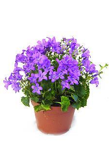 Pflanzen im blumengesch ft freesia in kreischa mehr als for Kleine mucken in topfpflanzen